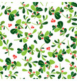 christmas seamless holly berry pattern vector image vector image