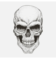 Scary skull of human vector image vector image