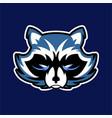 raccoon logo badge for sport esport vector image vector image