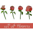 set of flowers from peones vector image vector image
