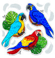 stiker bright colored parrots palm leaves and vector image
