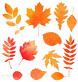 Watercolor collection of beautiful orange autumn vector image