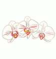 Orchids1 vector image