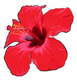 beautiful tropical flower on a white background vector image vector image