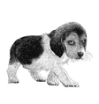 Puppy beagles 02 vector image vector image