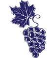 bunch of grapes vector illustration vector image