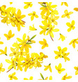 golden bell seamless pattern forsythia suspensa vector image