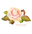 Rose watercolor for greeting vector image