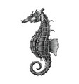 sea horse hand drawing vintage engraving isolate vector image