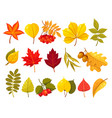 autumn leaves flat isolated vector image vector image