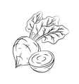 Hand drawn beetroot sketches vector image vector image