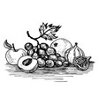 ink drawing grape vector image vector image