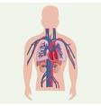 Medical human organs vector image