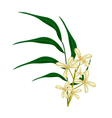 Beautiful Sweet Osmanthus Flower and Green Leaves vector image