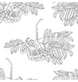 hand drawn rowan tree seamless pattern isolated on vector image