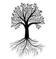 tree with leaves and roots vector image