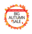 big autumn sale buy one get one free maple leaf ci vector image