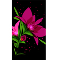 Bright pink flower on black background vector image vector image