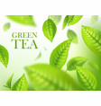 green tea leaves organic herbal background ads vector image vector image