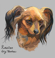 colorful russian long-haired toy terrier hand vector image vector image