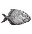 fish fossil vintage vector image vector image