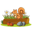 isolated picture cute squirrel vector image vector image