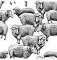 pattern with sheep vector image vector image