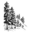 Pine forest winter mountain landscape drawing vector image