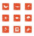 zoological icons set grunge style vector image