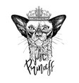 black oriental cat in crown with diamonds vector image