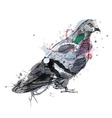 colored hand sketch a pigeon vector image vector image
