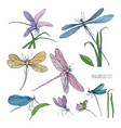 collection of beautiful colorful dragonflies vector image vector image