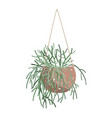 illistartion pencil cactus hanging in a vector image vector image