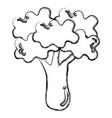 broccoli fresh isolated icon vector image vector image