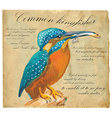 Common Kingfisher - An hand painted vector image