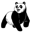 panda on white vector image