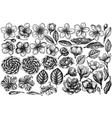 set hand drawn black and white hibiscus vector image