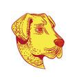 anatolian shepherd dog head etching color vector image vector image