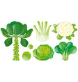 different types of green vegetables vector image vector image