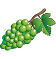 green bunch of grapes vector image