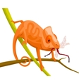 orange cartoon chameleon vector image vector image