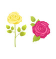 rose flower in pink and yellow color stem vector image