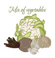 tasty veggies mix of vegetables vector image vector image