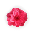 colorful naturalistic blossoming pink camellia vector image vector image