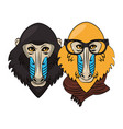 hipster mandrills cool sketch vector image vector image