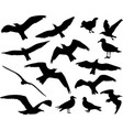 set of birds silhouettes 15 in 1 on white vector image vector image