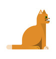charming orange cat with white paws vector image vector image