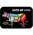 Cuts of beef vector image vector image