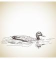 duck in water vector image vector image