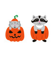 flat cat sitting at pumpkin racoon set vector image